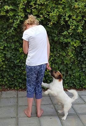 Bang voor honden