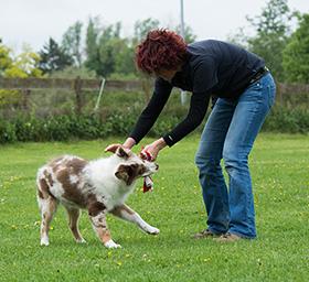 Hoe kun je een puppy het bijten afleren?