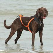Canicross: hardlopen met je hond