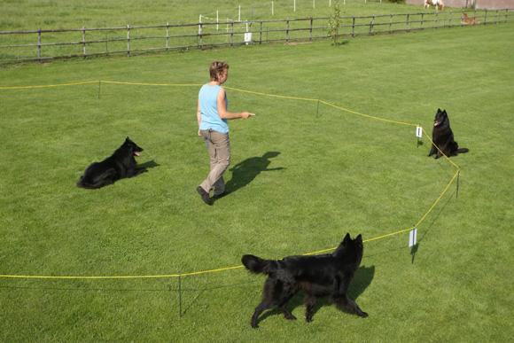 Het werken op de cirkel met meerdere honden.