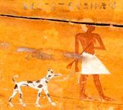 Zo zijn er in oude Egyptische graftombes en piramides tekeningen gevonden van honden die erg op Dalmatiërs leken.