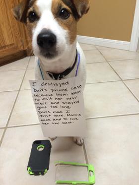 Op zoek naar een hondenfluisteraar