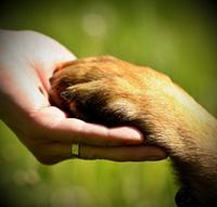 Empathie bij honden