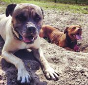 Hond in het zand