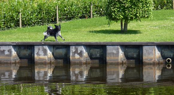 Hond bij damwand