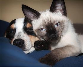 Hond en kat samen