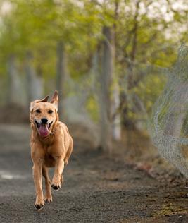 Hond loopt weg
