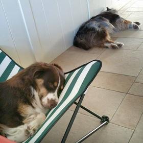 Honden op PVC vloer