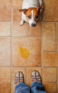 Image Result For Mijn Hond Poept In Huis