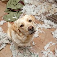 Hond sloopt spullen