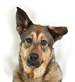 Anaalklieren bij de hond