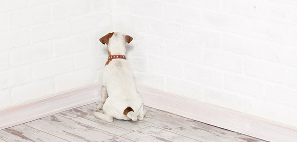 https://www.doggo.nl/images/artikelen/hond-straf.jpg
