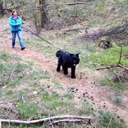 Hond volgt een spoor