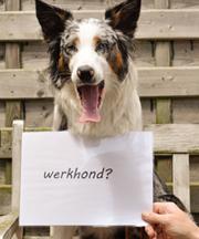 Werkhond