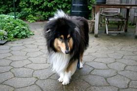 Zieke hond met diarree