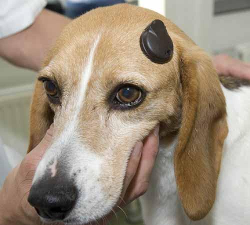 Hoortoestel voor dove honden