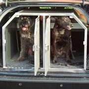 Honden achterin de auto