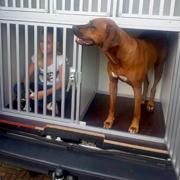 Hond in uitlaatbus