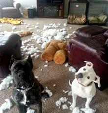 Mijn hond maakt alles stuk