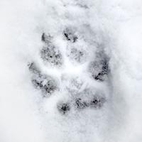Pootjes in de sneeuw