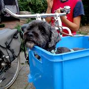 Voorop de fiets