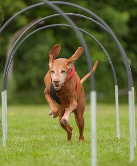 Hoopers hondensport