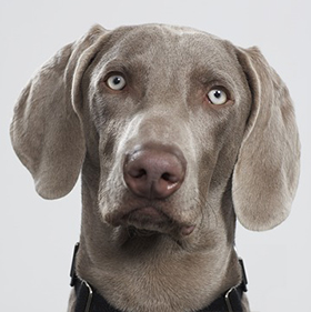 Kunnen honden jaloers zijn?
