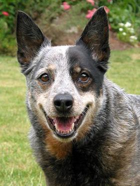 Hond met glimlach