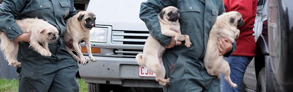 Malafide hondenhandel
