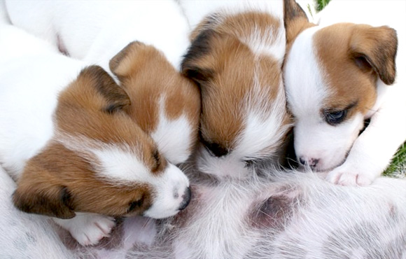 Nestje puppy's