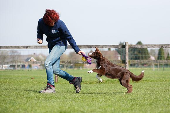 Clickertraining wordt bij veel hondensporten toegepast