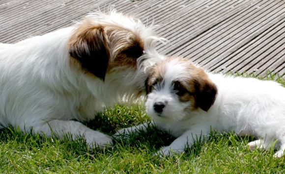 Pup met moederhond