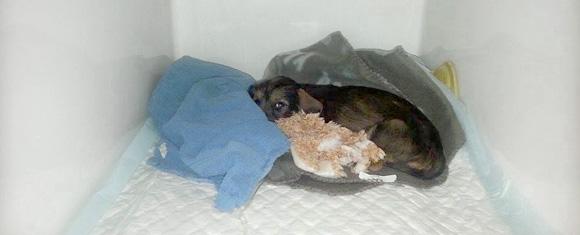 diarree pup stoppen