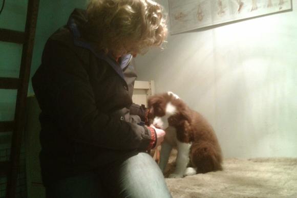 Puppy bij de osteopaat
