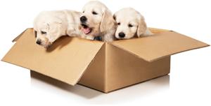 Puppy's te koop