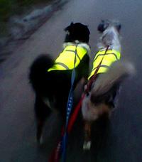 honden in het donker