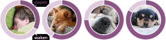 Slapende honden
