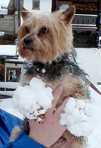 Sneeuwklompjes