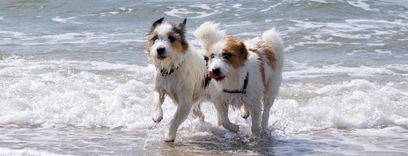 Honden met zelfvertrouwen