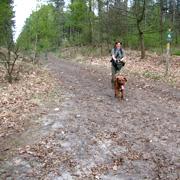Speuren in het bos