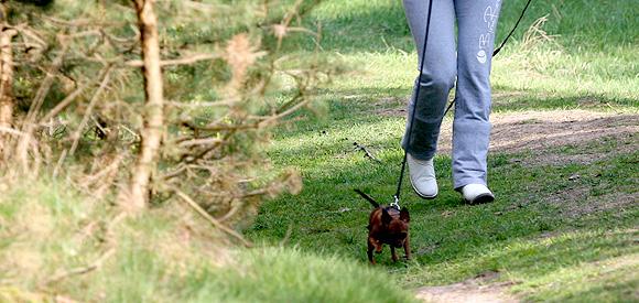 Iedere hond kan speuren, van Chihuahua tot Duitse Dog.