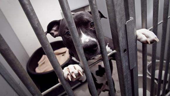 Vechthond in het asiel