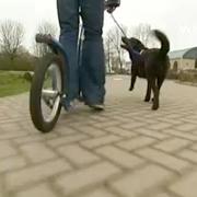 Steppen met je hond