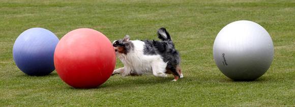 Hallo baas, daar kom ik met mijn bal!