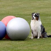 Eerst leren achter de bal te gaan zitten en dan…