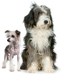 Vachtverzorging bij honden