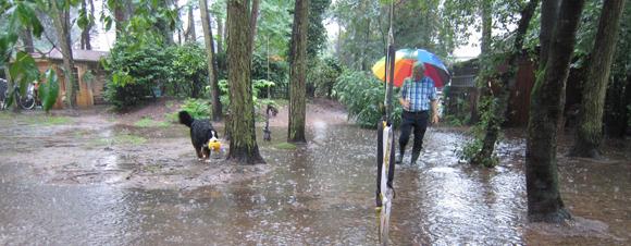 Wandelen in de regen