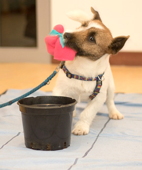 Lift voor hond maken