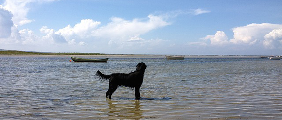 Hond gaat zwemmen