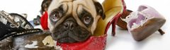 Hoe word ik hondengedragstherapeut?